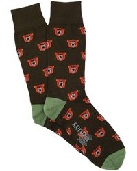 Corgi Lightweight Angry Bear Socks - Multicolour