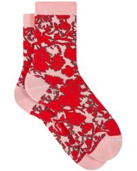 Paul Smith Calcetines Rave Floral Rosa - Rojo