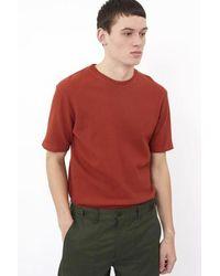 Minimum Wilson Picante - Rouge