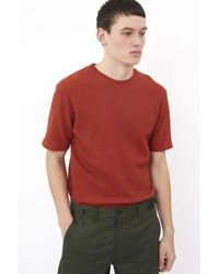 Minimum Red Wilson Picante