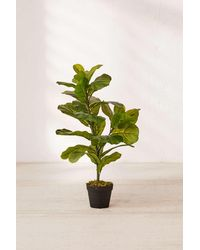 Urban Outfitters Fiddle Leaf Potted Faux Plant - Green