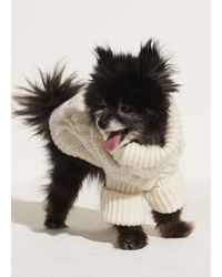 Vince Cable Knit Dog Jumper - White