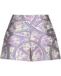 Giamba Shorts - Purple