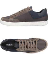 Geox Sneakers & Tennis shoes basse - Marrone