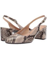 A2 By Aerosoles Silver Age (bone Snake) 1-2 Inch Heel Shoes - Multicolor
