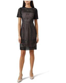 Elize Lace Dress