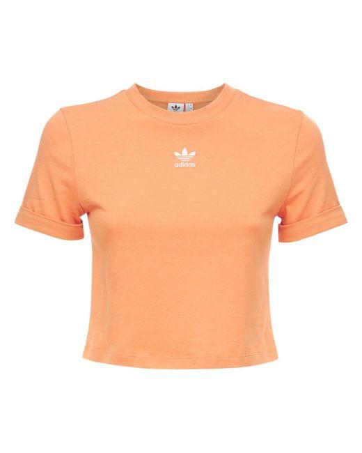 Adidas Originals クロップトップ Orange