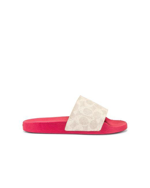 Шлепанцы Udele В Цвете Chalk & Confetti Pink COACH