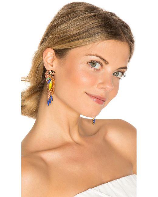 Elizabeth Cole | Multicolor Paulina Parrot Earring | Lyst