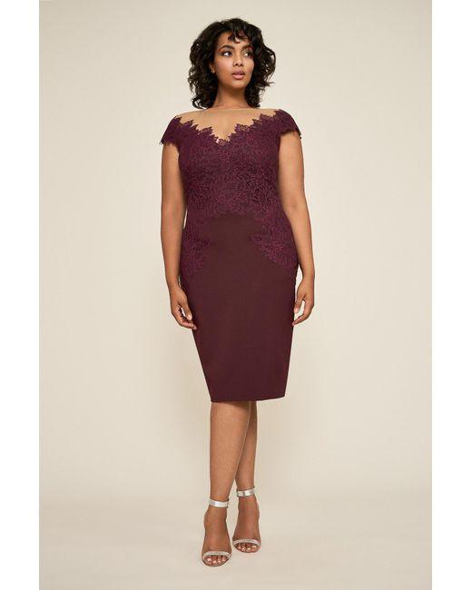 Olivine Lace Neoprene Dress - Plus Size