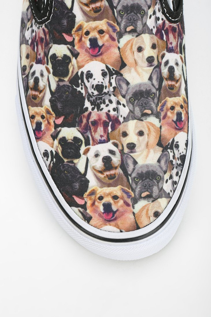 vans dog